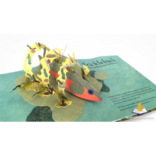 Welcome to the Neighborwood: Pop-up book - Фото 7